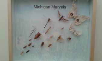 Shown here are Michigan's Marvels, from the smallest cricket to the biggest moth.