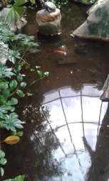 """A look at the """"rain forest's"""" only fish resident, and a sneak peek at the ceiling as well."""