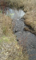 A tiny stream at an outlook area of Habitat Haven trail