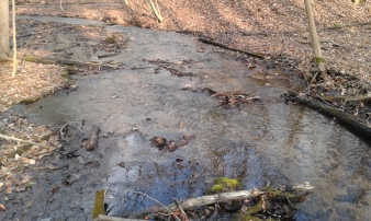 Closer look at the stream on the bridge between Beech Maple trail and Raptor Ridge trail