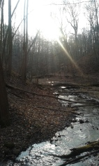 Same trail, Trout Run, with the sun