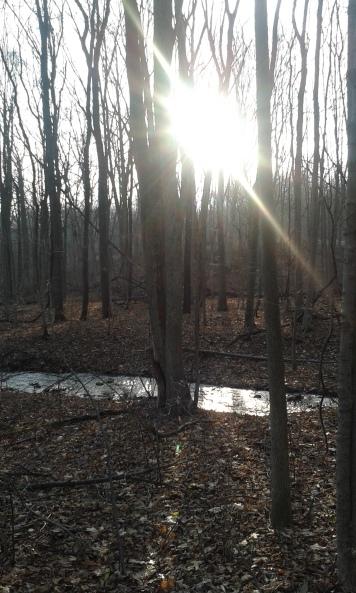 Stream along Trout Run trail