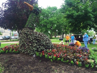 The peacock is the biggest of the many topiaries in Bronson Park. Master gardeners tended to these throughout the day. Photo Credit / Rachel Zook